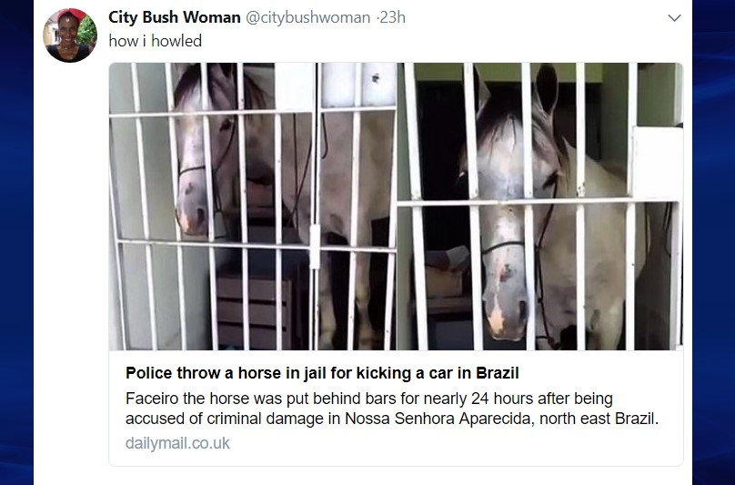 Horse in jail