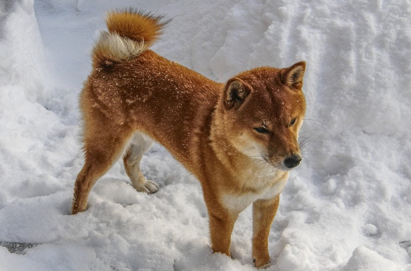 Dog playing in snow (illustration)