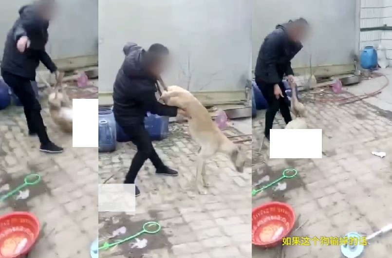 Dog owner beats animal to death